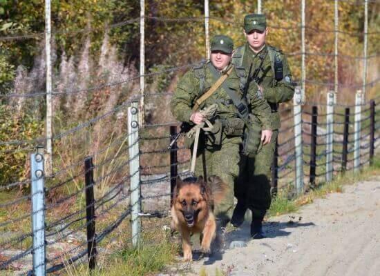 пограничные собаки