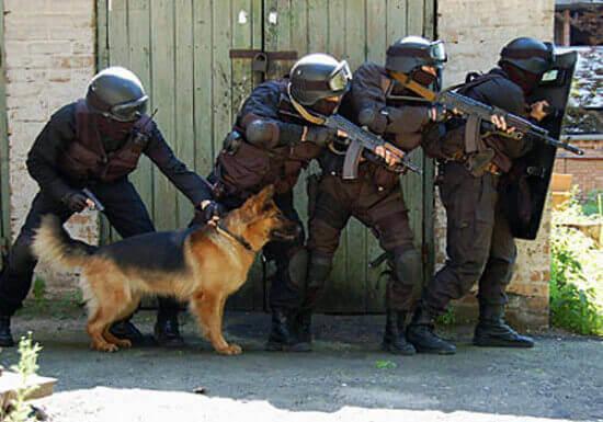 штурмовая собака